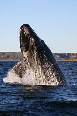 Photo of Deporte y ecología: Diego Simonet adoptó una ballena